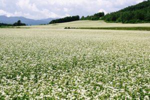 2011ほろかないフォトコンテスト奨励賞作品 『「純白なウエディングドレス」への連想』 - 尾島 伊勢治(剣淵町)