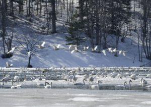 2014ほろかないフォトコンテスト奨励賞作品 『春の使者』(組写真15) - 内海 千樫(幌加内町)